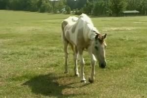 Int #133-USA-Florida-horses