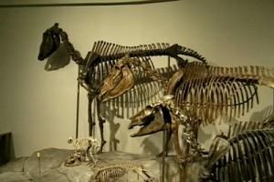 Int #143-USA-Pittsburgh-Carnegie dinosaurs