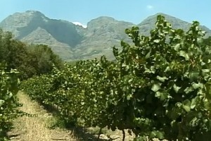 Int #171-South Africa - wine