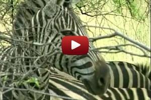 Int 19 - South Africa safari