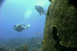 Int 68 - Responsible Travel - Coral Reef