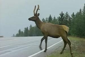 Int #69 - Responsible Travel - Wildlife