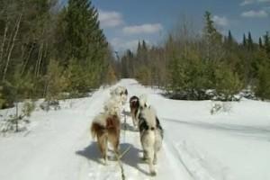 Railways 23 Dog sled 2