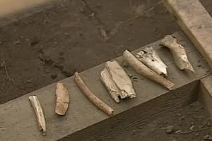 Railways #52-Sask-Wanuskewin bones