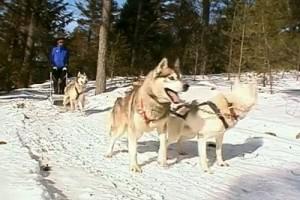 Railways #60 - Ontario Parry Sound dog sled 2
