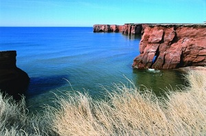 nature sea cliffs grass